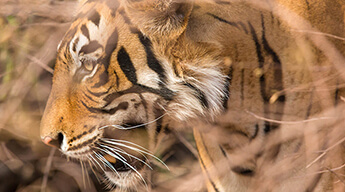 Luxury Golden Triangle Tour with Ranthambore
